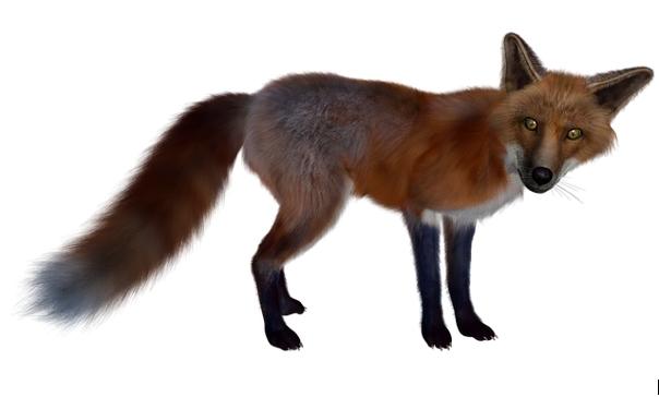 Le jeu du renard qui passe ou le jeu du facteur